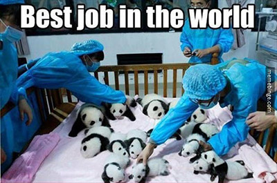 Funny Panda Joke about the best high paying jobs in the medical field